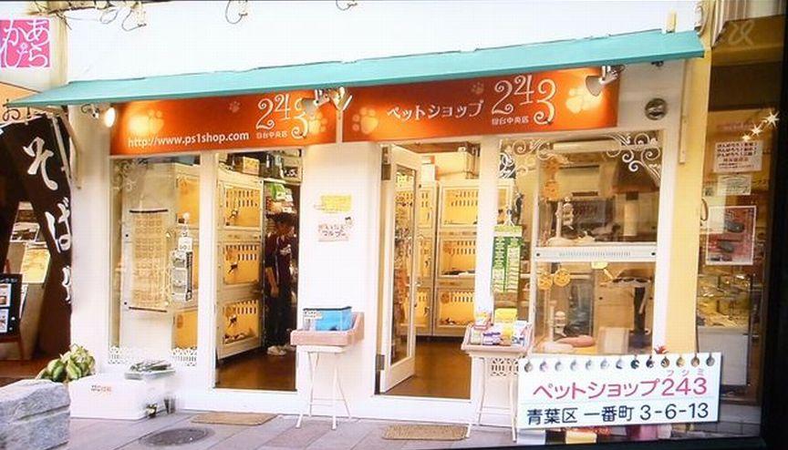 ペットショップ243仙台中央店・猫専門店