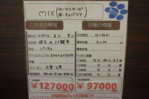 DSC00607[1]