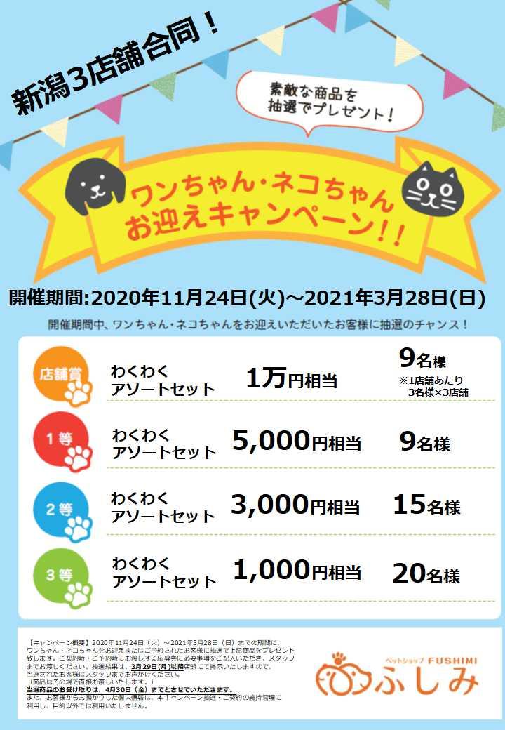 家族になろうよ!第26弾・お迎えキャンペーン開催のお知らせ・ペットショップふしみ・新潟3店舗合同